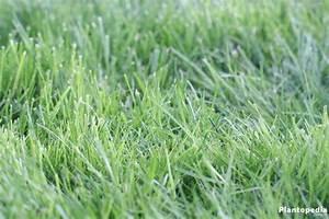 Blaukorn Dünger Für Rasen : blaukorn d nger f r den rasen was ist drin ist er giftig plantopedia ~ Frokenaadalensverden.com Haus und Dekorationen