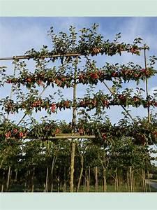 Apfelbaum Hochstamm Kaufen : malus butterball apfelbaum 39 butterball 39 39 hochstamm spalier 39 h 150 b 200 t 10 stamm 200 cm ~ Orissabook.com Haus und Dekorationen