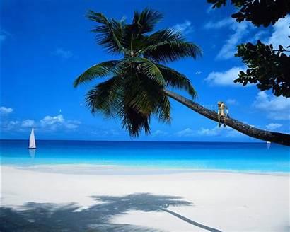 Paradise Tropic Animated Screenshots