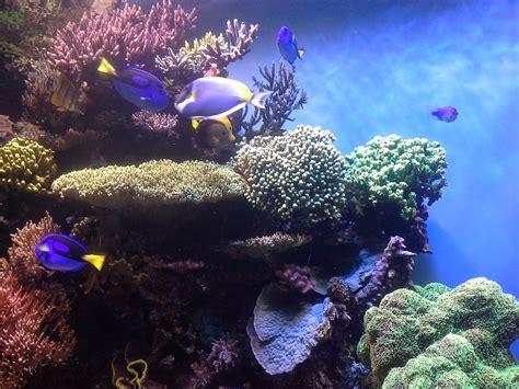 coral reef corals aquarium  photo  pixabay