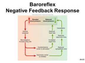 Negative Feedback Response