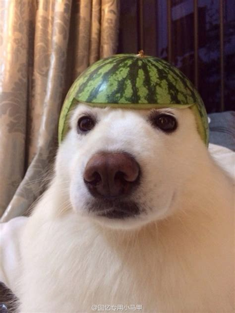 pet safe   watermelon   orange
