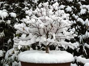 Japanischer Ahorn Im Kübel : japanischer ahorn ist er im k bel winterhart ~ Michelbontemps.com Haus und Dekorationen