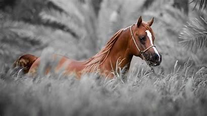 Horse Wallpapers Screen Downloads