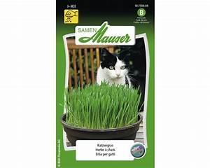 Graine Herbe A Chat : herbe chat graines de fleurs samen mauser acheter sur ~ Melissatoandfro.com Idées de Décoration