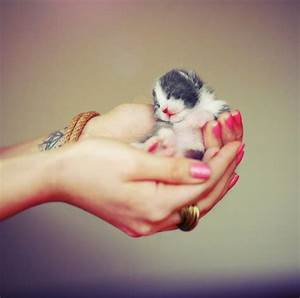 Cute Baby Animal Pictures! | Cute animal pictures and ...