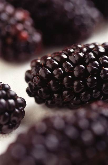 Mora Fruta Blackberry Wikipedia Moras Fruit Berry