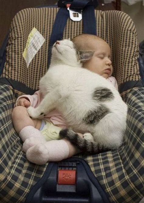 Cute Baby Sleeping With Cat  Cat And Baby Picture Funny