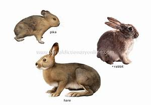 ANIMAL KINGDOM :: RODENTS AND LAGOMORPHS :: EXAMPLES OF ...