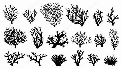 Coral Drawing Silhouettes Illustration Silhouette Vector Sea