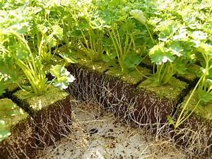 Quand Semer Les Tomates : quand et comment semer du persil r ussir son semis de ~ Melissatoandfro.com Idées de Décoration