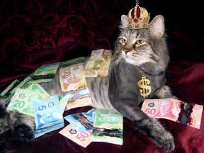 money cat free photo money cat wealth canadian money free