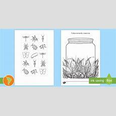 * New * Ficha De Recortar Coleccionar Insectos  Material De