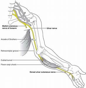 Wiring And Diagram  Diagram Of Ulnar Nerve Pathway