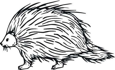 porcupine coloring pages template