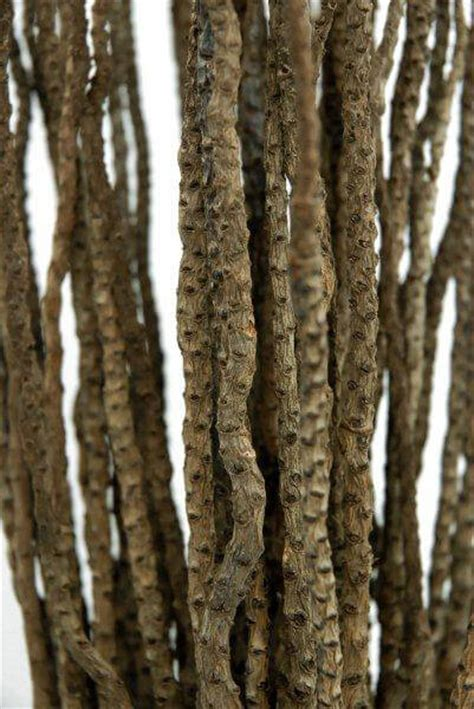 natural coco branches    branches