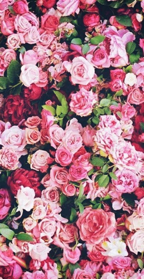 gambar background bunga pink galeri bunga hd