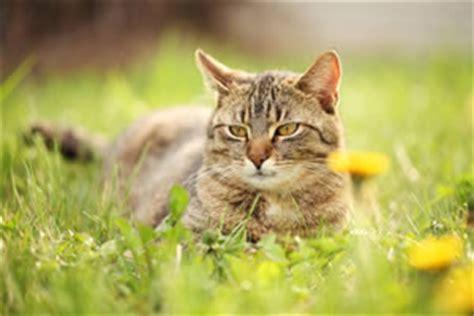 Schwertfarn Giftig Für Katzen by Giftige Und Ungiftige Pflanzen F 252 R Katzen Liste