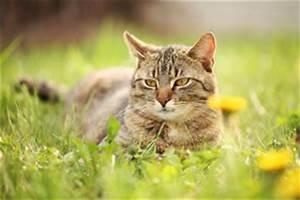 Katzen Garten Vertreiben : katzen aus dem garten vertreiben katzenschreck co ~ Michelbontemps.com Haus und Dekorationen