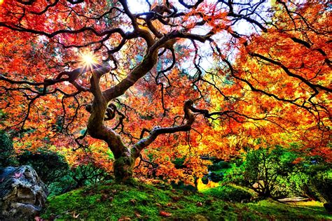michael matti a tree in the portland japanese garden 2013 and faith
