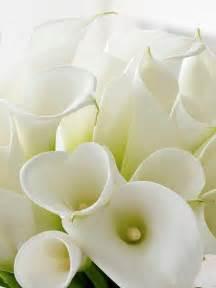 White Calla Lily Flower
