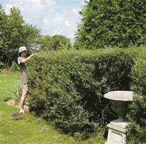 Prix Pour Tailler Une Haie : comment tailler une haie trucs et conseils jardinage ~ Dailycaller-alerts.com Idées de Décoration
