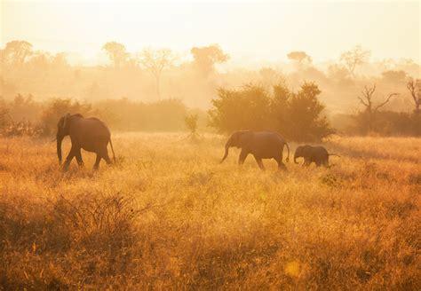 Safari Mornings