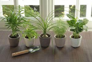 Pflanzen Die Kaum Licht Brauchen : zimmerpflanzen pflege sch dlinge an gr npflanzen ~ Markanthonyermac.com Haus und Dekorationen
