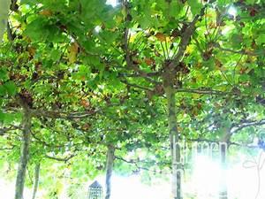 Schöne Bäume Für Garten : nat rlicher schatten im garten b ume und kletterpflanzen blumen schwarz ~ Eleganceandgraceweddings.com Haus und Dekorationen