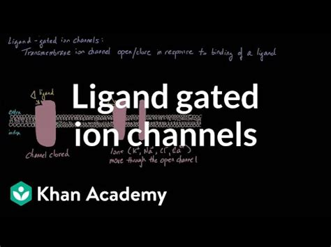 ligand gated ion channels video khan academy