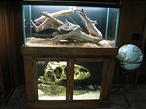 Kingsnake.com Photo Gallery> Cages, Terrariums, Ponds, Aquariums > Carpet Python Cage Completed Best Carpet Cleaners For Pet Urine Smell Cleaner Cleveland Ohio Papeleria La Carpeta Barcelona How To Clean Auto Grease Out Of Red Theme Party Centerpieces What Do Black Beetle Eggs Look Like Dust Mites In Your Repairs Northern Suburbs Melbourne
