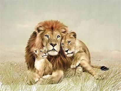 Lion Definition Animals Animal Lions Leones Familia