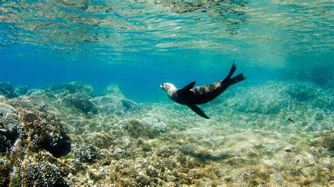 Turismo ecológico en Baja California Sur, México