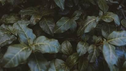 Bush Leaves Plant Fhd Hdtv 1080p