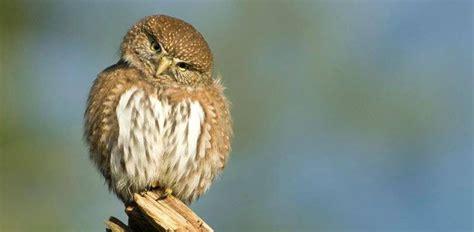 birds yosemite national park  national park service