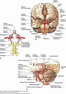 229 Best Images About Neurology On Pinterest