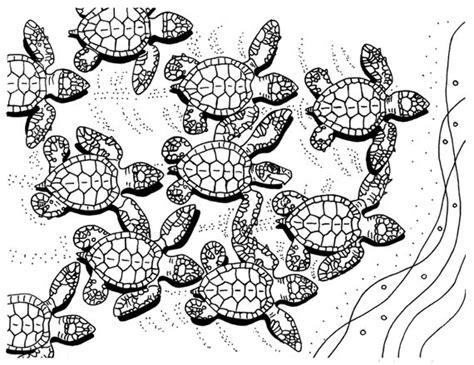 baby sea turtles coloring page sea turtle art