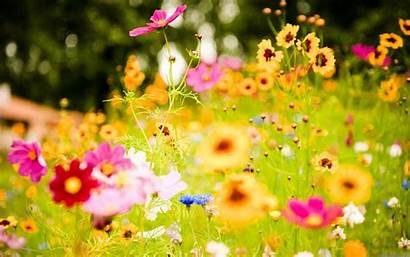 Flowers Wallpapers Background
