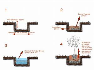 Planter Un Olivier En Pleine Terre : planter un olivier en pleine terre o quand et comment ~ Farleysfitness.com Idées de Décoration