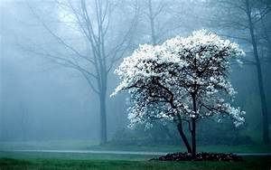 wallpapers: Morning Fog Wallpapers
