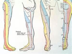 Dermatome Chart Feet