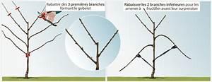 Comment Tailler Les Orchidées Pour Qu Elles Refleurissent : comment tailler un arbre en gobelet ~ Melissatoandfro.com Idées de Décoration