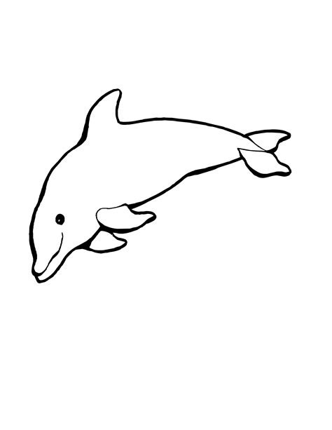 friendly underwater creature  dolphin coloring pages  printables