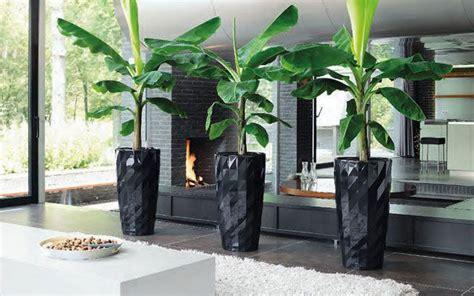 grosse zimmerpflanzen  langzeitgefaessen zimmerpflanzen