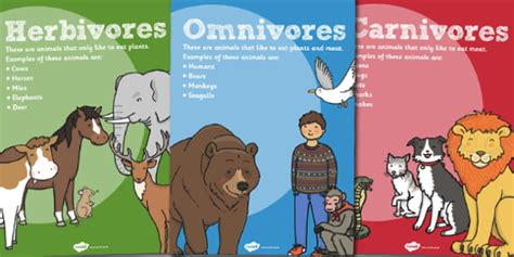 Herbivores Omnivores And Carnivores Posters  Poster, Science