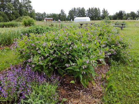 Augi - mūsu palīgi - Permakultūras dārzs