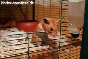 Haustiere Für Kinder : haustiere f r kinder goldhamster zwerghamster ~ Orissabook.com Haus und Dekorationen