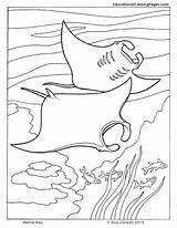 Coloring Pages Ocean Manta Fish Sea Ray Printable Animal Cuttlefish Colouring Animals Seashore Drawing Sheets Colouringpages Dolphin Crafts Creatures Adult sketch template