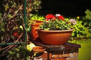 Pflanzen Für Den Garten : pflanzen und grilltipps f r den garten ~ Frokenaadalensverden.com Haus und Dekorationen