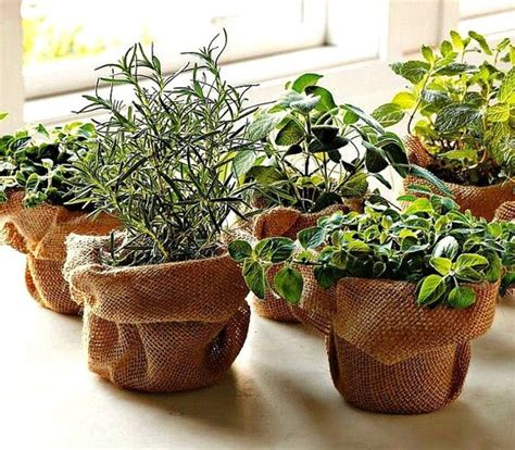 windowsill herb garden windowsill herb garden collection six spices 1000 seeds